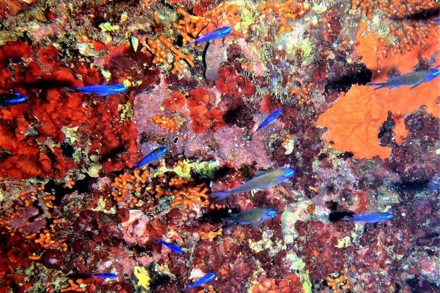 pesci-e-coralli
