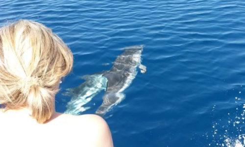 Escursione in barca da Tropea